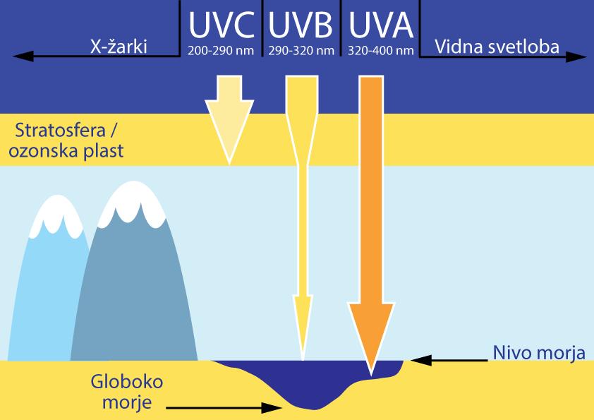 UV žarki in njihovo prodiranje na Zemljo